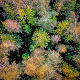 Осенний фьюжн