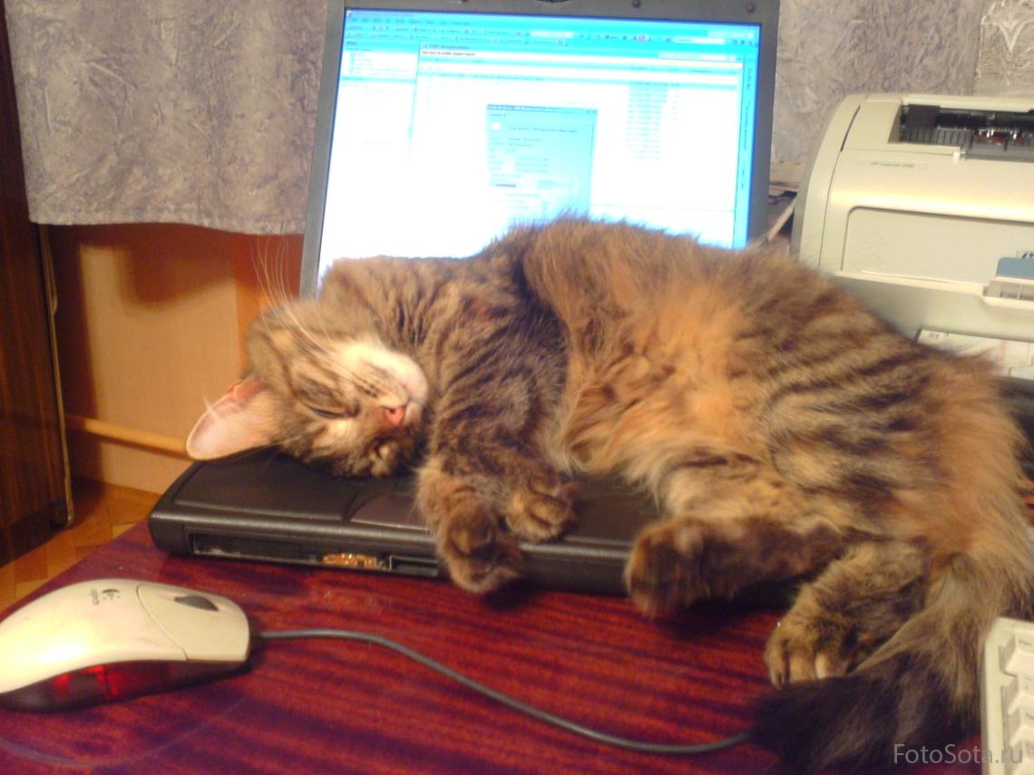 Мышь? Поиграть? Не-е-е, лучше поспать!